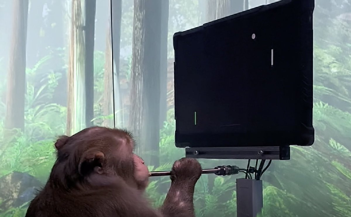 monkey plays pong with mind
